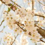 JICA訓練3週目(4/16~4/22)