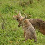 タンザニア旅行に行ってきた!ンゴロンゴロ自然保護区編(Day6)