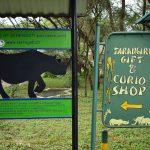 タンザニア旅行に行ってきた!タランギーレ国立公園編(Day3)