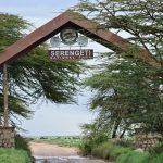 タンザニア旅行に行ってきた!セレンゲティ国立公園編(Day4-5)